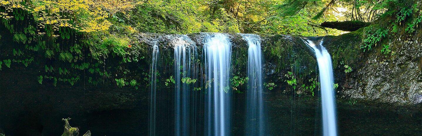 Une cascade dans la forêt.