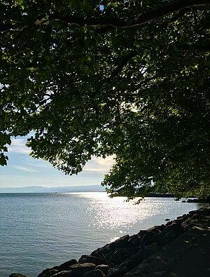 Arbre au-dessus du lac, photo Tania Netz