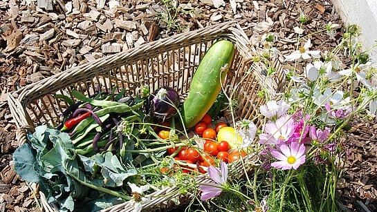Panier de légumes récoltés au jardin