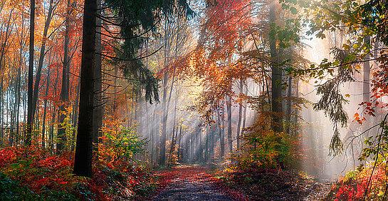 Un bel automne