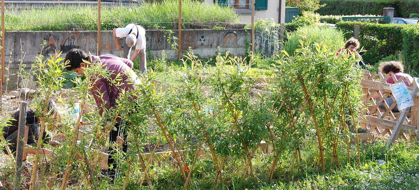 Plusieurs personnes en train de travailler dans un jardin participatif