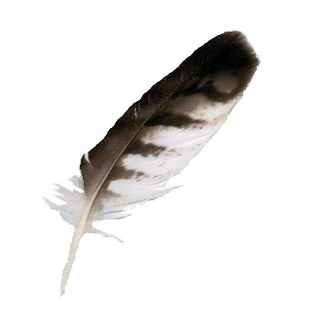 Plume d'oiseau taillée pour l'écriture